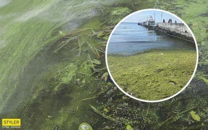 """""""Просто болото"""": в Одесі туристи показали відео з популярного пляжу"""