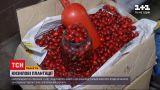 Новости Украины: сколько стоит кизил и что из него можно приготовить