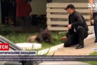Новости Украины: в Одессе владелец питбуля натравливает его на собак и угрожает людям
