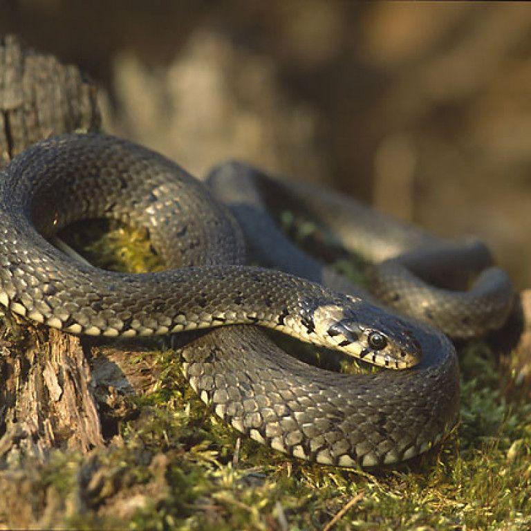 Во Львовской области спасают женщину, которую укусила змея