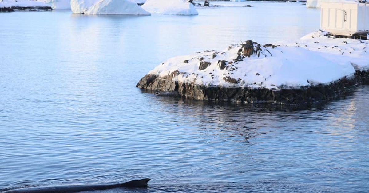 © Національний антарктичний науковий центр