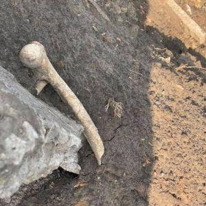 Людський череп і кістки знайшли серед будівельного сміття під Львовом