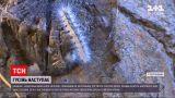 Новости Украины: в Херсонской области произошло нашествие американской белой бабочки