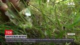 Новини України: у Вінницькій області 5 дітей отруїлися грибами