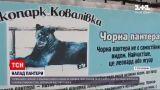 Новини України: у приватному зоопарку пантера покусала чоловіка – потерпілий у тяжкому стані