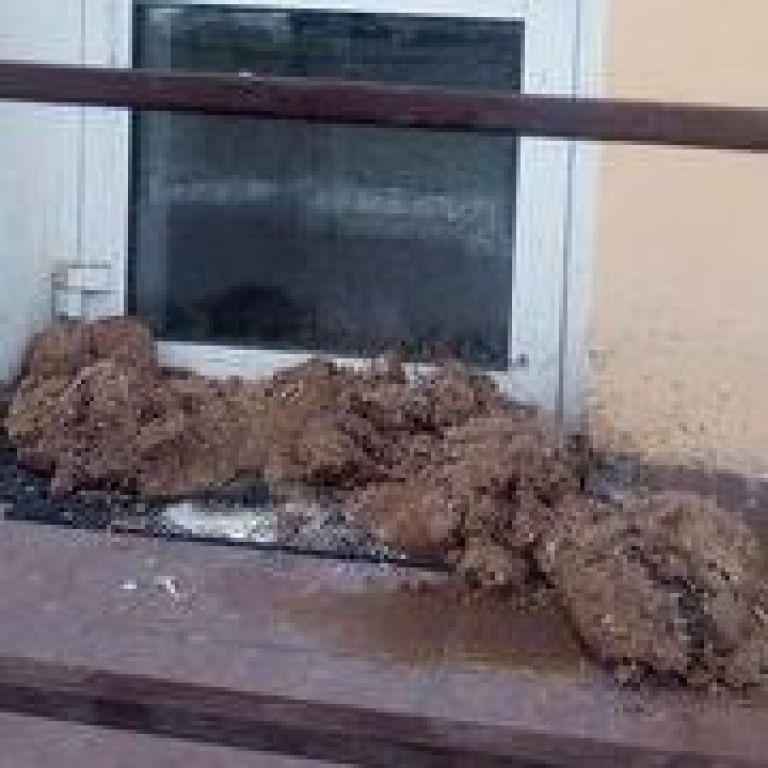 У російському Омську невідомі принесли купу гною під двері штабу Навального: фото