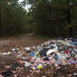 Обгортки з McDonald's та магазинні чеки. У лісі на Волині начебто знайшли львівське сміття