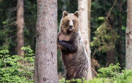 В США мужчина спасся от медведя, который напал на него в собственном доме
