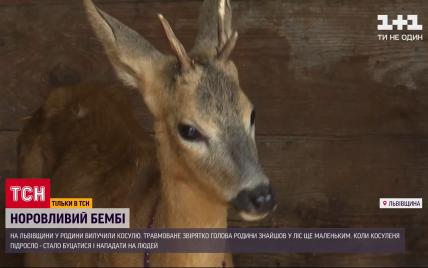 Во Львовской области забрали у людей спасенную косулю, которая нападала на окружающих