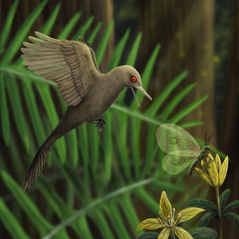 Ученые нашли самого маленького в мире динозавра – он был размером с колибри