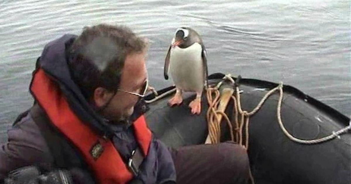 Пінгвін врятувався від косаток, застрибнувши у човен полярників