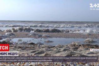 Новости Украины: медузы на украинских курортах - возможно ли там отдыхать