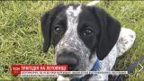 Задержанные рейсы и громкий скандал: в Новой Зеландии полиция в аэропорту застрелила щенка