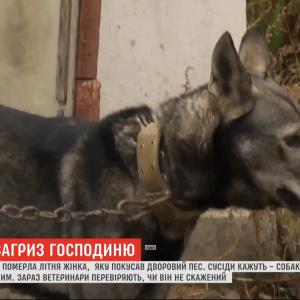На Харківщині домашній собака не залишив на тілі пенсіонерки живого місця. Жінка померла у лікарні