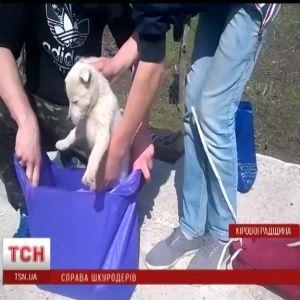 На Кіровоградщині закрили кримінальну справу проти шкуродерів, які розчленували цуценя