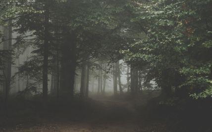 В Черновицкой области второй день ищут пропавшего в лесу грибника