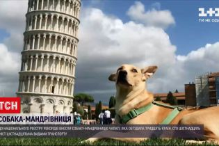 Новини України: собака-мандрівниця з Києва побувала в 30 країнах і встановила Національний рекорд