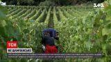 Новости мира: Союз французских виноделов призывает приостановить поставки шампанского в Россию