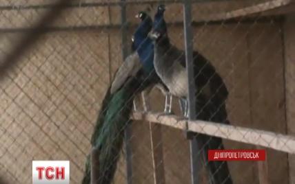 """В Днепропетровске """"накрыли"""" элитный закрытый VIP-клуб, основанный чиновниками-аферистами"""
