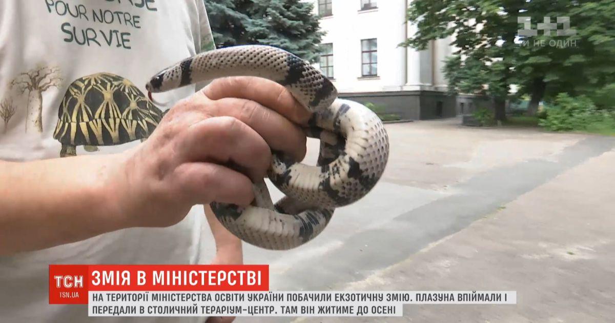 На территорию Министерства образования Украины пожаловала экзотическая змея
