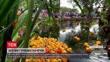 Новини світу: у британському Кантербері відбувся щорічний заплив гумових качечок