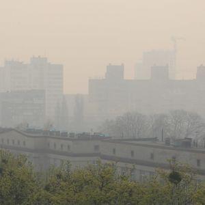 Учені пояснили, як пов'язане забруднення повітря та смертність від коронавірусу