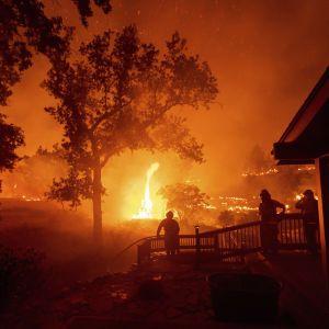 У Каліфорнії пожежі вже охопили пів мільйона гектарів та знищили майже півтори тисячі домівок
