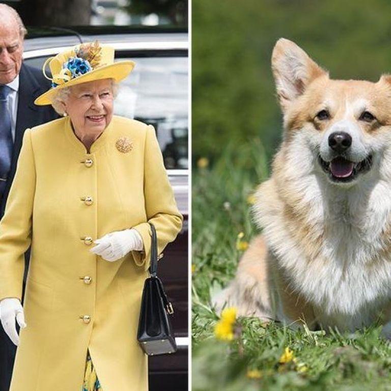 Єлизавета ІІ засумувала через смерть свого карликового собачки