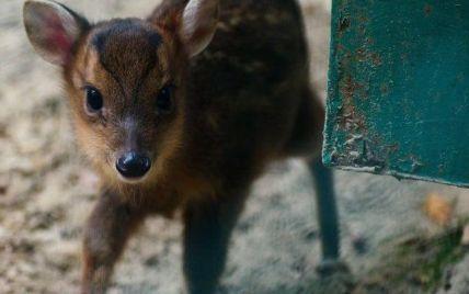 У харківському екопарку народився олень, який гавкає
