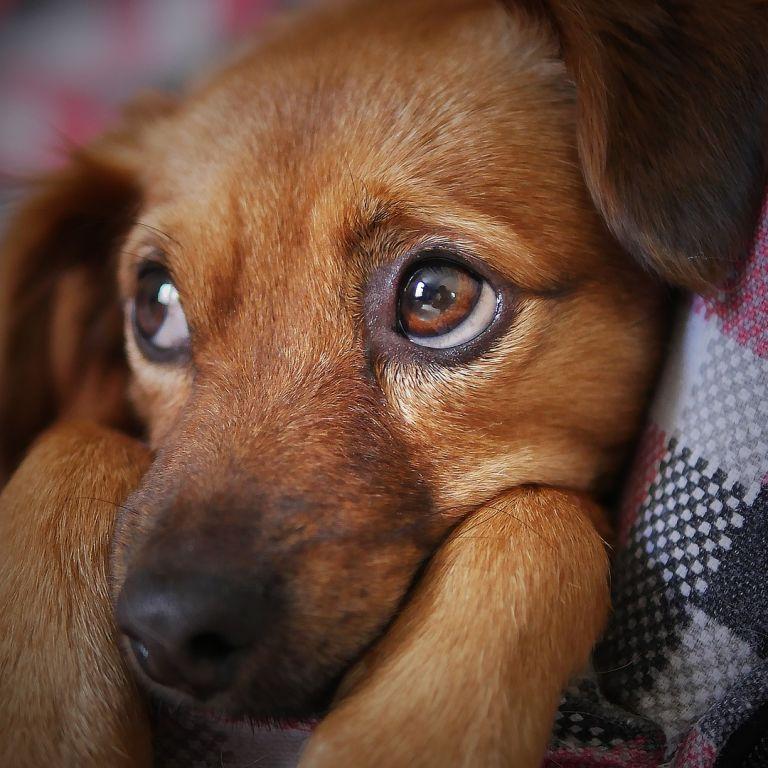 В Англії зниклий пес повернувся до господарів через 11 років