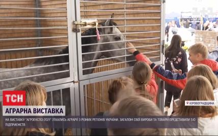 У Кропивницькому десятки тисяч фермерів на аграрній виставці випробовують техніку і купують племінних тварин