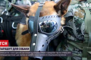 Новости мира: в Китае армейский пес успешно прыгнул с парашютом