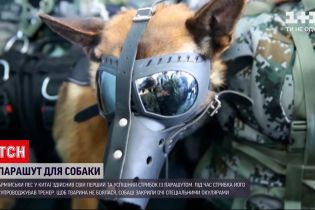 Новини світу: у Китаї армійський пес успішно стрибнув з парашутом