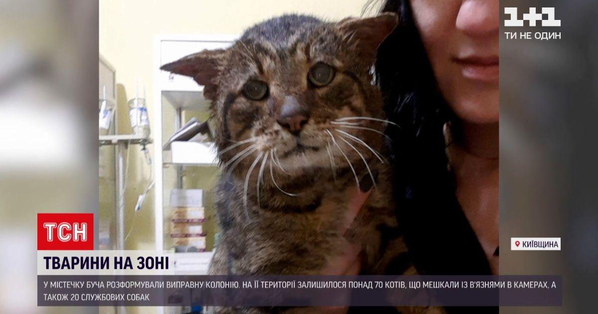 Под Киевом расформировали исправительную колонию, но тамошние коты и собаки остались непристроенными