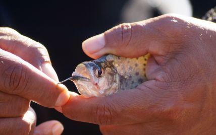 Учені знайшли найдавнішу в світі рибу-хижачку, яка жила одночасно з динозаврами