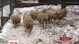 У покинутій фермі на Львівщині знайшли мертвими понад півсотні екзотичних тварин