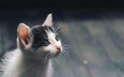 В Одессе от продавцов-живодеров спасли котят: из 62 в живых осталось меньше половины