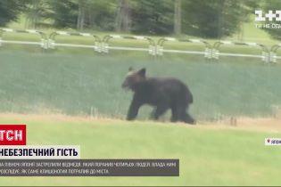 Новини світу: у Японії застрелили ведмедя, який поранив чотирьох людей