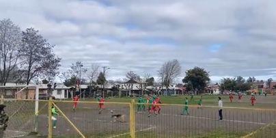 Чотирилапий бомбардир: пес забив курйозний гол в матчі Чемпіонату Чилі (відео)
