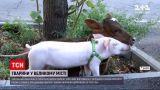Новости Украины: в Днепре американке пришлось расстаться с животными, которых она выгуливала
