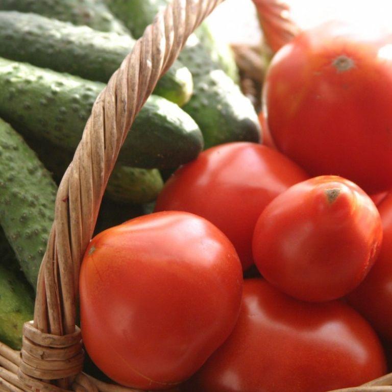 На рынках Украины продолжают дешеветь овощи: какие сейчас цены на тепличные огурцы и помидоры