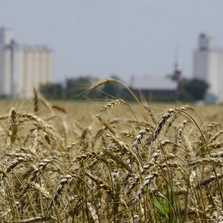 Украина установила рекорд по экспорту зерна: хватит ли хлеба самим украинцам в условиях засухи