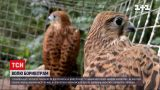 Новости Украины: в ровенском зоопарке отпустили на волю спасенных пустельг