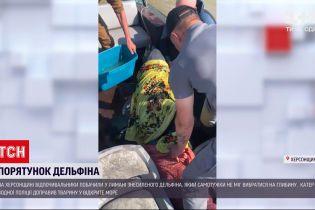 Новости Украины: в Херсонской области спасли дельфина, которого штормом выбросило на мель