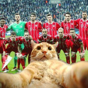 Пухнасті стрікери. Трійка найвідоміших котів, які прославилися на футбольних матчах