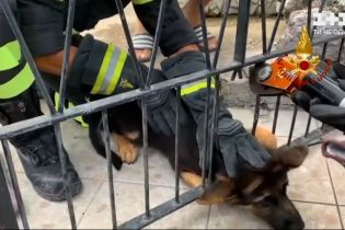 Новости мира: в США пожарные спасли собаку с бетонной стены, а в Италии - с решеток в заборе