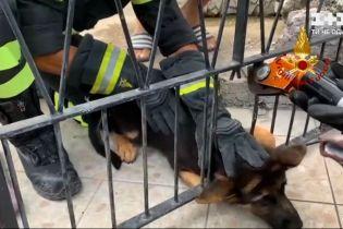 Новини світу: у США пожежники врятували собаку з бетонної стіни, а в Італії – з решіток у паркані