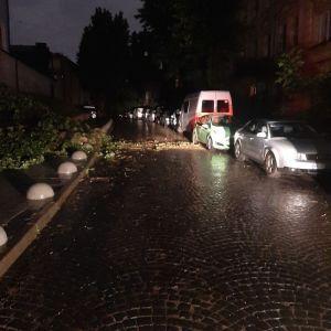 Непогода во Львове: из-за сильных дождей в городе повалены деревья и подтопило дом (фото)