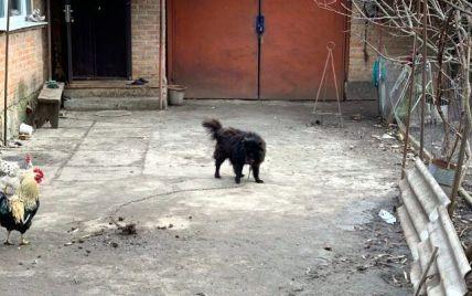 """Появились фото """"элитного пса"""", которого пенсионерке посоветовал продать нардеп Брагар, чтобы оплатить за газ"""