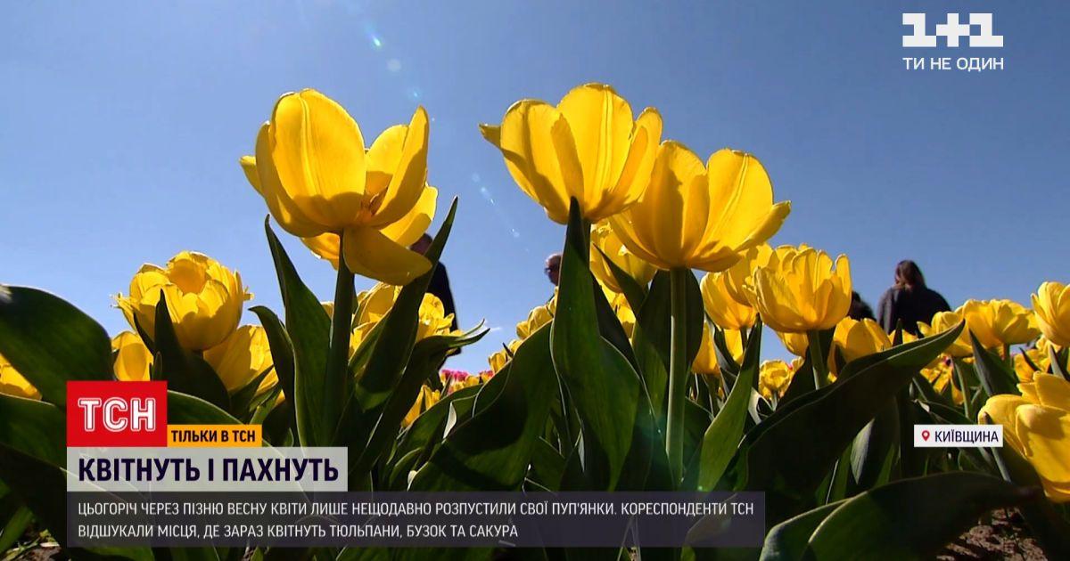 Новини України: де потішитися весняним цвітінням та пофотографуватися